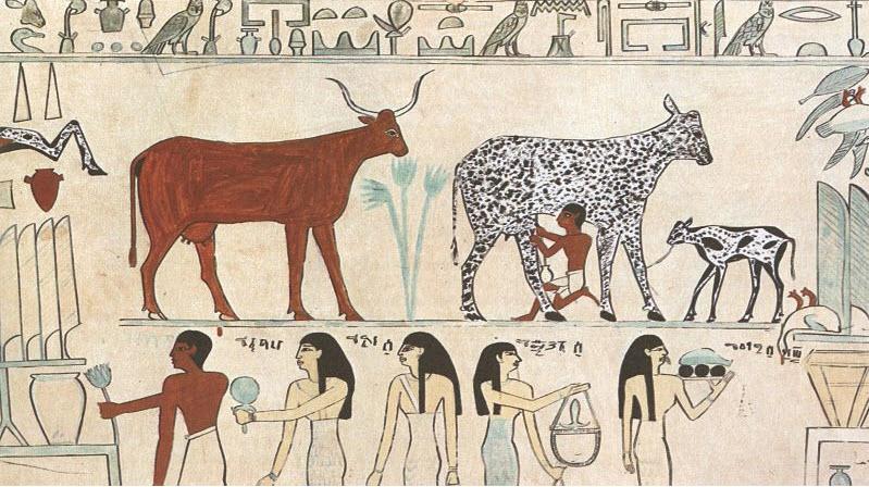 Queijo mais velho do mundo' descoberto em antiga tumba egípcia ...